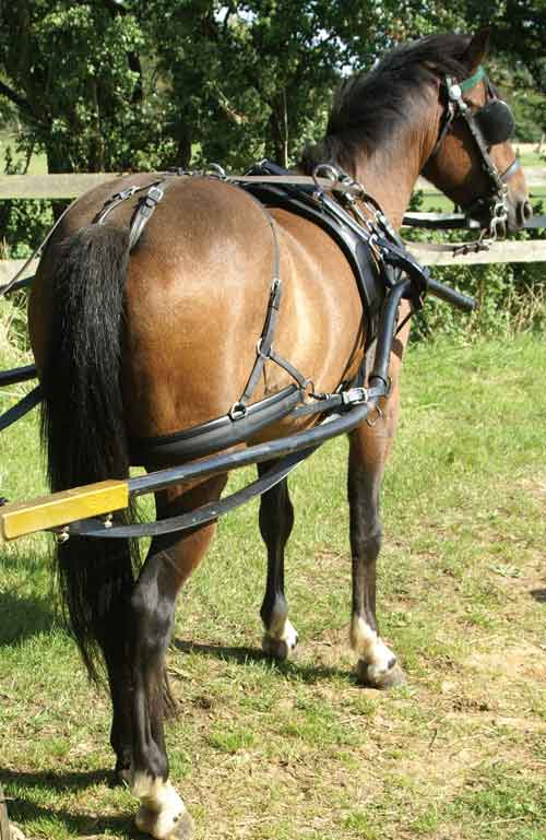Zilco Driving Harness Bridle Rosettes